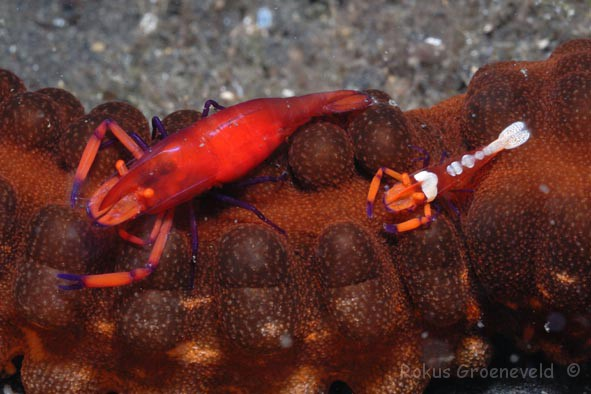 Lembeh Indonesia 36 Of 150